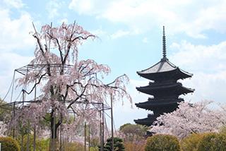 東寺(京都府)