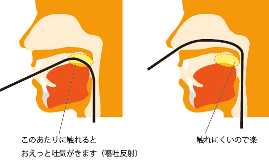 喉の奥の図